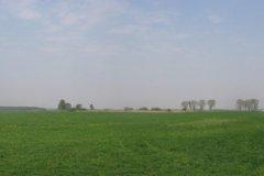 panorama_gozdzie