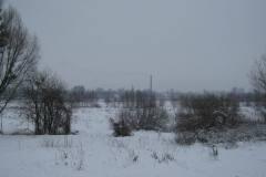 2010.01.16 Grapa