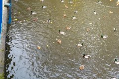 2011.11 Jeziorka