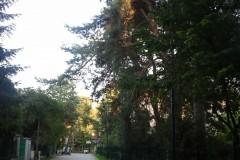 2012.08 Ul. Strumykowa