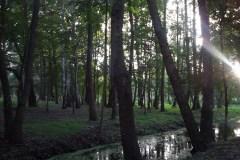 2012.09 Pomosty na bagnach w Parku Zdrojowym