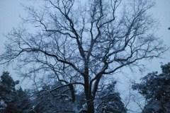2013.03 Zimowe drzewa