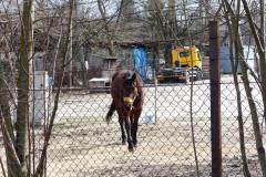2014.03.18 Konie
