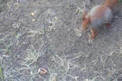 2015.02.15 Wiewiórka