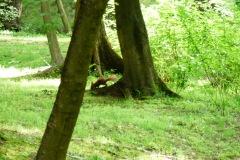2015.05.28 Wiewiórki