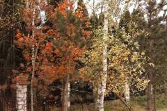 2019.10.27 Kolory jesieni
